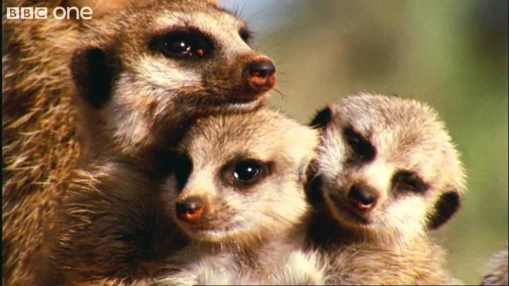What A Wonderful World With David Attenborough -- BBC One [FULL